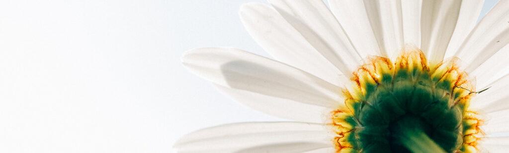 Rinascita in primavera…suggerimenti per la ripartenza