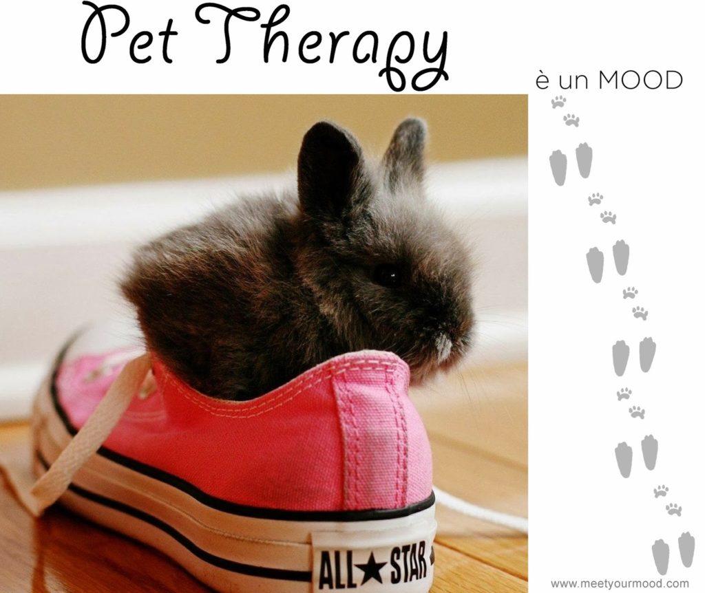 Pet therapy: cosa può risvegliare il contatto con gli animali?